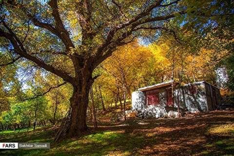 جمال الخريف في كردستان ايران