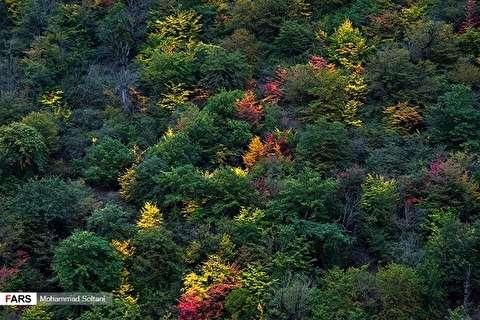 ألوان الخريف الساحرة في غابات هيركاني
