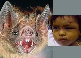 نتیجه تصویری برای خفاش ها