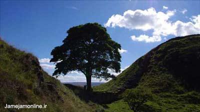 عکس منظره درخت