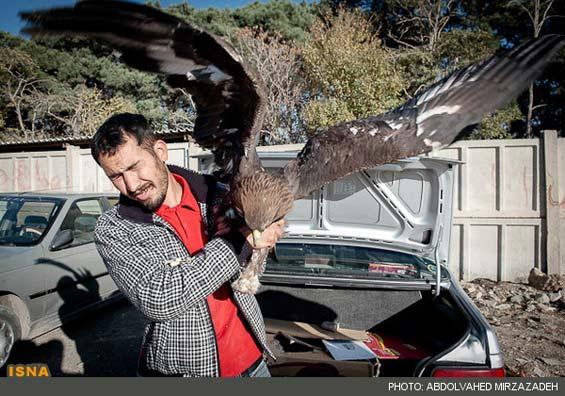 تصاویر: بورس پرنده فروشی در تهران - تابناک | TABNAK