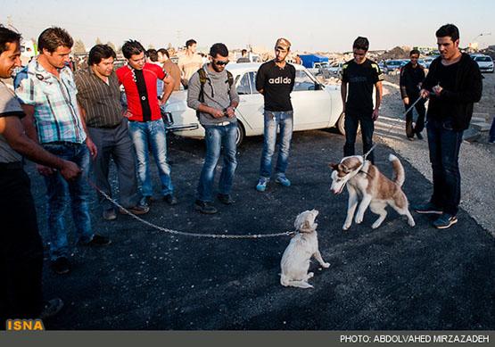 روزنما: جمعهبازار سگها در تهران - تابناک | TABNAK