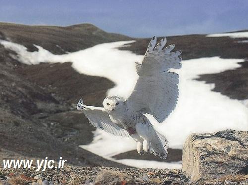 پنج پرنده زیبا اما قاتل در دنیا