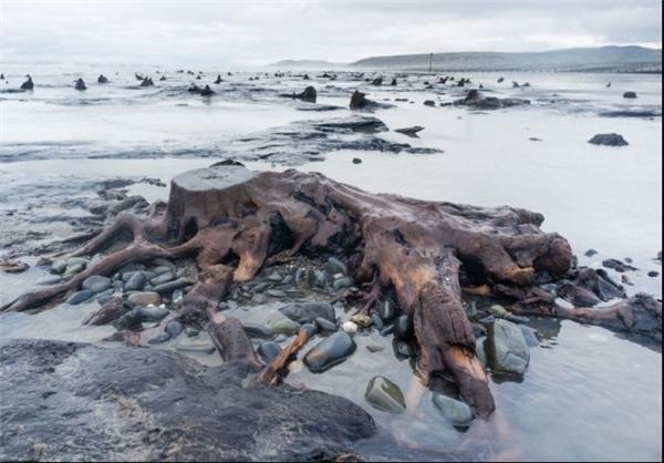 کشف جنگل 5000 ساله