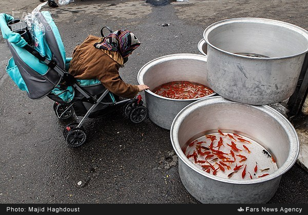 هواشناسی عید نوروز ماهی قرمز عید نوروز - تابناک | TABNAK