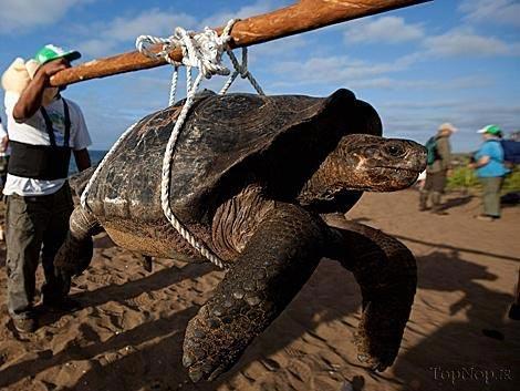 جزیره لاکپشتهای غول پیکر