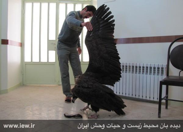عکس+عقاب+خطرناک