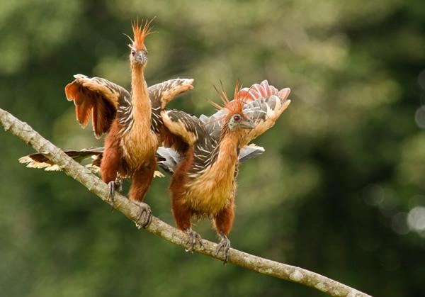 بدبوترین جانوران روی زمین