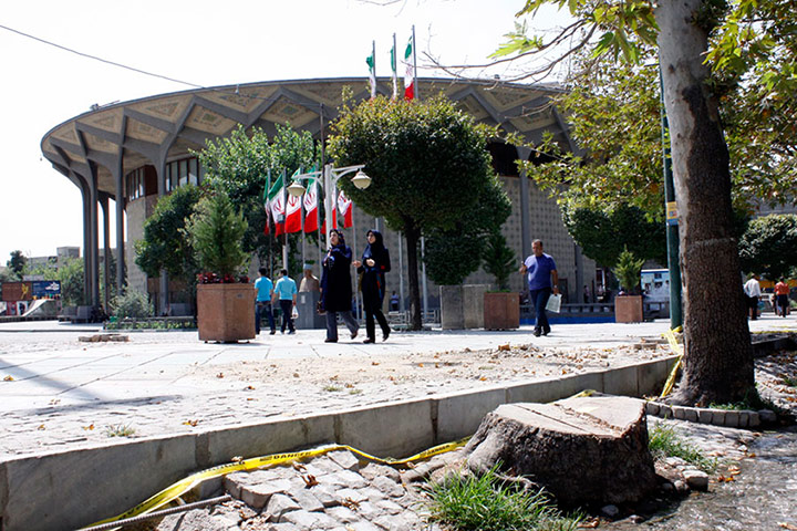 گزارش گاردین از قطع چنارهای کهنسال در تهران +تصاویر