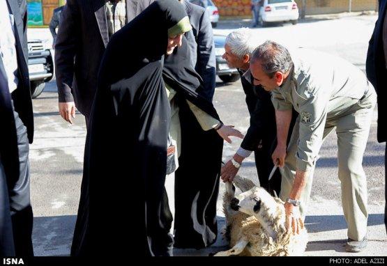 ابتکار مانع قربانی کردن گوسفند شد +عکس