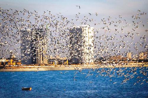 دریاچه «چیتگر» میزبان صدها پرنده مهاجر
