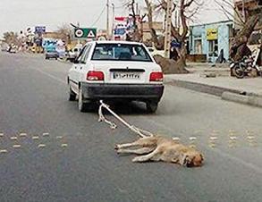 سگ کشی در ایران