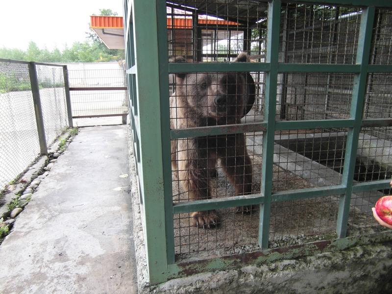 انتشار چند تصویر، سرنوشت خرس مفلوک بابلسر را عوض کرد