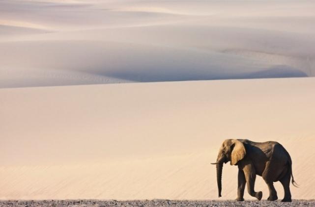 برترین عکسهای حیات وحش در ماه جولای