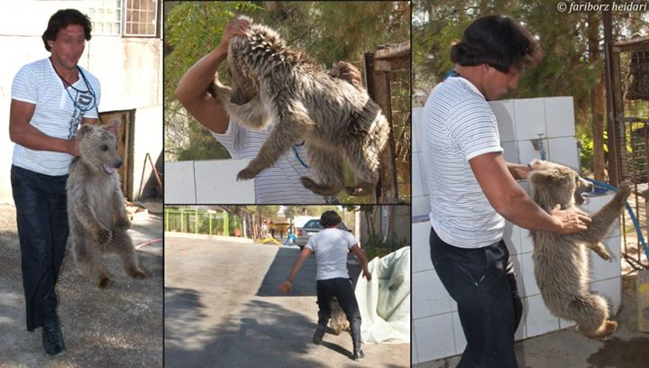 روایت عکاس از کتک خوردن توله خرس سیرک +عکس