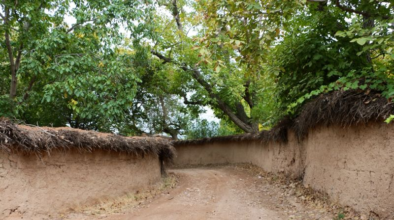 هواسناسی نگاه شما: کوچه باغ های شیراز - تابناک | TABNAK