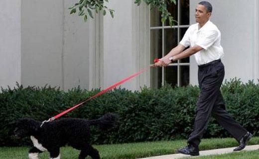 تلاش برای دزدیدن سگ اوباما ناکام ماند
