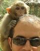 توجیه کشتار میمونهای وارداتی با بیماری خطرناک «ابولا»...