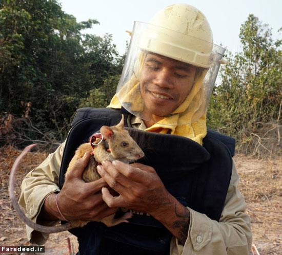 نتیجه تصویری برای کامبوج + تابناک