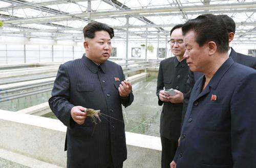 اعدام رئیسمرکز نگهداریلاکپشتها به دستور اون