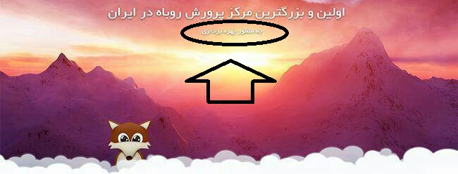 روش صحیح ذبح اسلامی