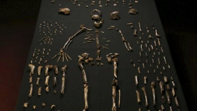 کشف گونهای از انسان نخستین
