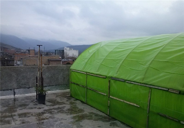 احداث گلخانه در پشت بام خانه/ایجاد اشتغال با ۱.۳ میلیون تومان