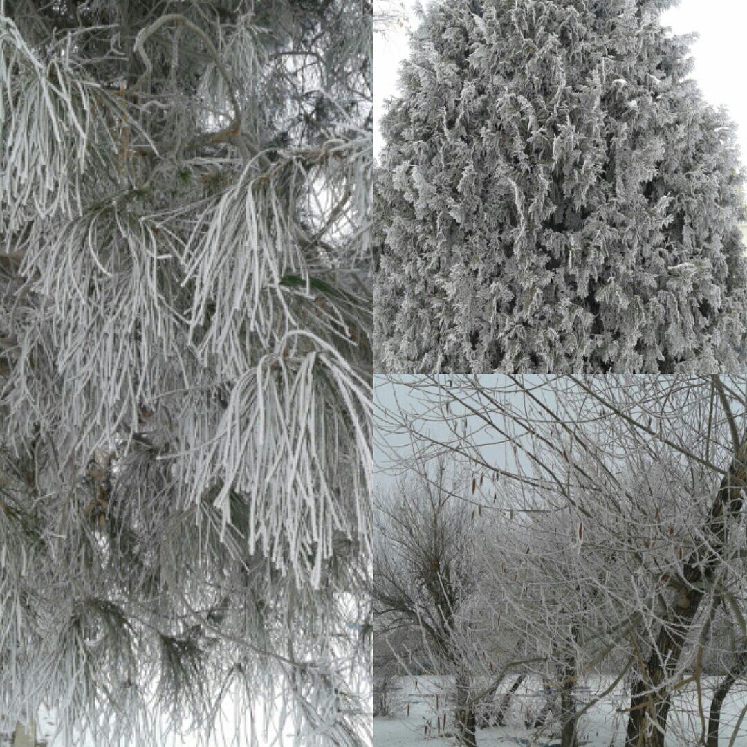 طبیعت یخ زده میاندواب اذربایجانغربی