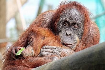 10 عکس دیدنی از حیات وحش