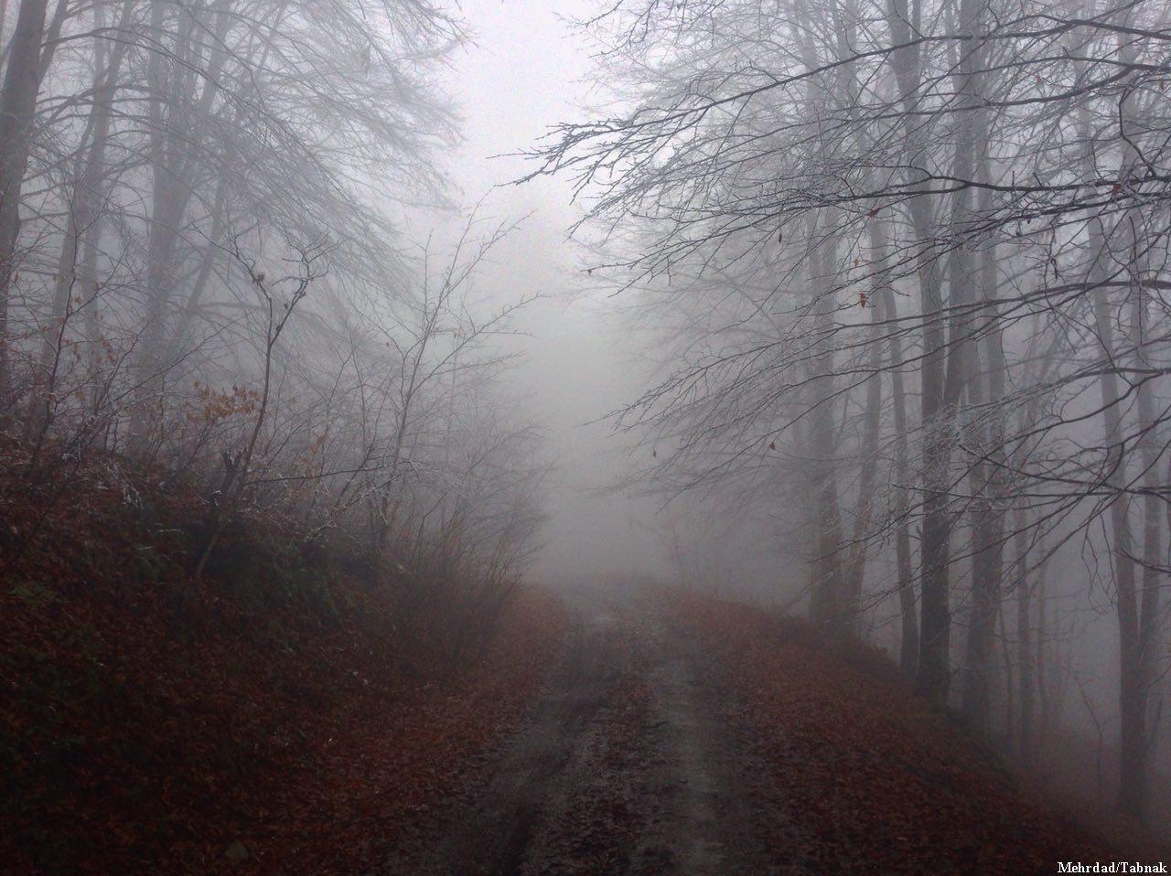 جنگل مازيچال کلاردشت