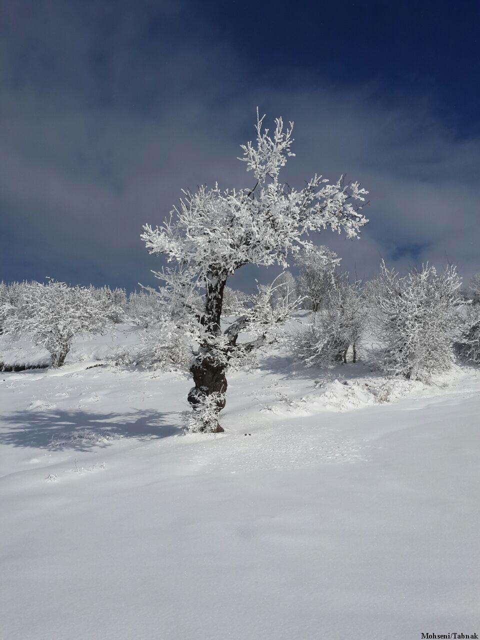 جنگل توسکا چشمه گلوگاه, مازندران