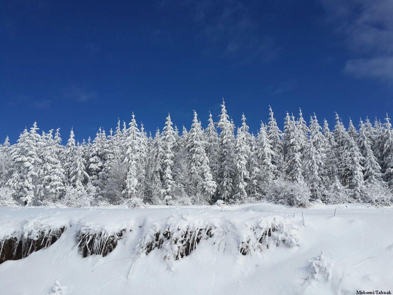 جنگل توسکا چشمه گلوگاه ,مازندران