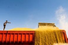 کاهش ۴۵ درصدی واردات گندم و افزایش ۲۲ درصدی واردات شکر/ ۱۱ نکته مهم از واردات کشاورزی در سال ۹۵