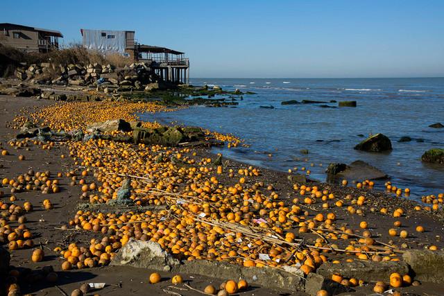 ماجرای ریختن پرتقالهای شمال به دریای خزر