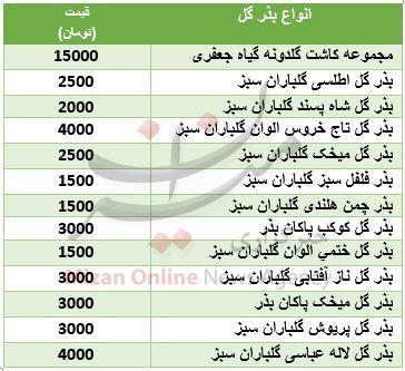 خرید بذر گل چقدر هزینه بر است؟ + جدول قیمت