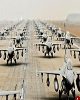 روسیه ایجاد پایگاه هوایی در شهر عفرین سوریه را تکذیب...