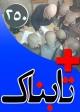 ویدیوهای دو خودکشی تکان دهنده در پایتخت: آیا مسئولان این هشدار امام خمینی را شنیدهاند؟! / ویدیوی دیدنی از بنیانگذار دیوار مهربانی