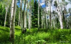چگونه در بانکهای کشور بهره ٢٢درصدی حدود ٤ برابر میشود؟/ ریشه های نزاع آب در پرآب ترین استان کشور/ نابودی سالانه 5 هزار هکتار جنگل برای مصرف قلیان
