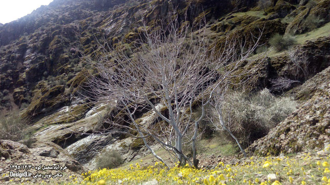 مخمل کوه در خرم آباد