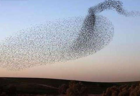 رقص زیبای پرندگان به صورت گروهی