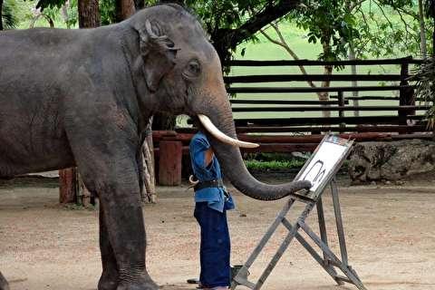 خوشنویسی و نقاشی فیلها در ژاپن
