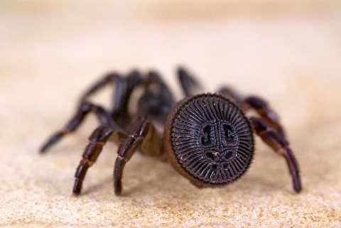 عنکبوتهای وحشتناک