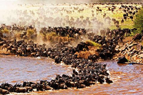 مهاجرت حیوانات از میان شکارچیان