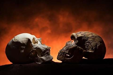 آیا نئاندرتالها اجداد انسانها هستند؟