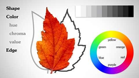 المانهای اصلی: شکل، مقدار، رنگ و مرزها