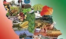 کالبدشکافی واردات کشاورزی ایران در سال ۹۵