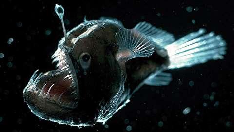 موجودات اعماق اقیانوس چگونه زنده ماندهاند؟