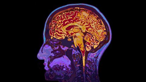 چند درصد از مغز خود استفاده میکنید؟