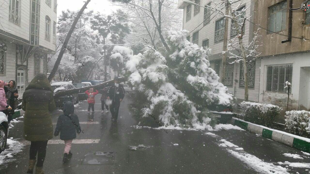افتادن درخت در یکی از میدان های نارمک