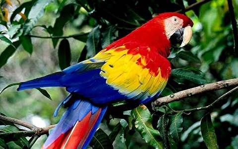 تماشای زیبایی پرندگان گرمسیری